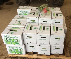 Our FIRST delivery of large and small Summer CSA shares of 2015 ready to go to their new homes!