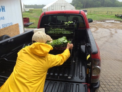 loading harvested veggies