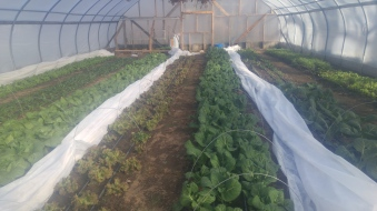 It's Spring in our greenhouse in December!